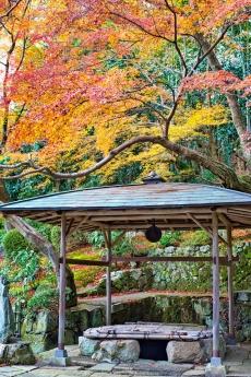 2019_kyoto_autumn_38.jpg