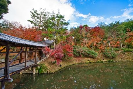 2019_kyoto_autumn_44.jpg