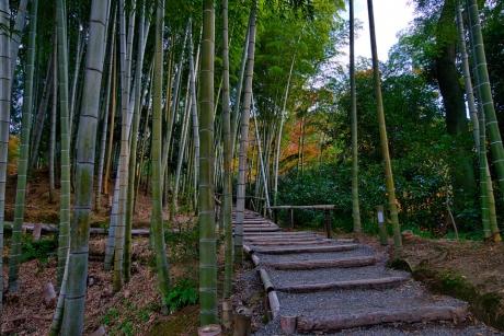 2019_kyoto_autumn_48.jpg