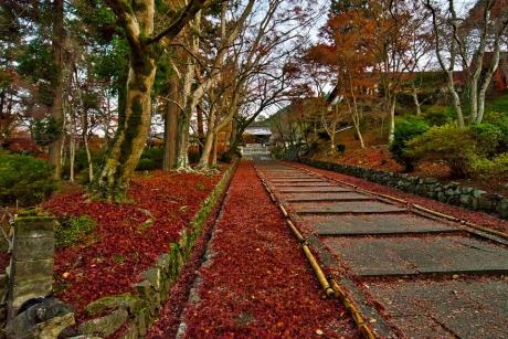 2019_kyoto_autumn_4.jpg