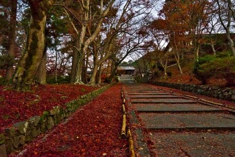 2019_kyoto_autumn_5.jpg