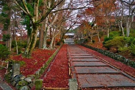 2019_kyoto_autumn_6.jpg