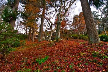 2019_kyoto_autumn_7.jpg