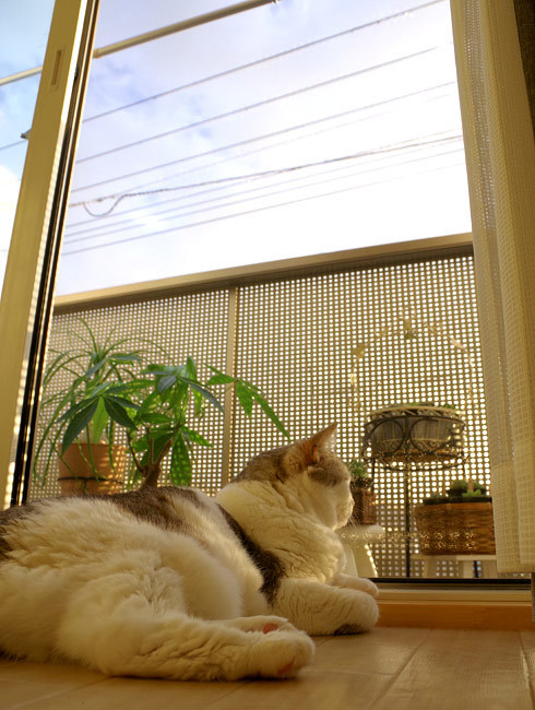 秋の猫の不思議