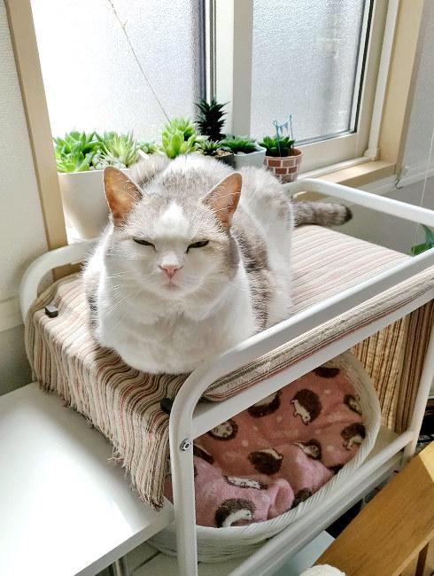 猫が良ければまぁいいか