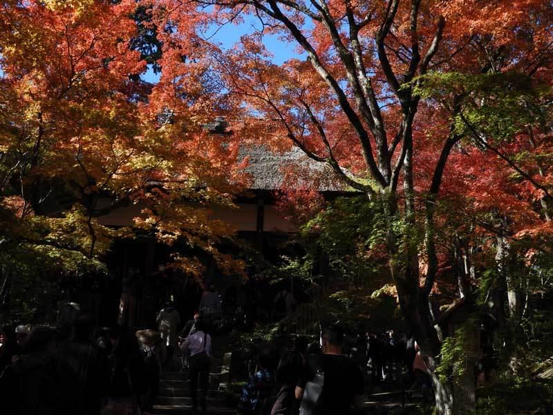 jyoujyakukouji191123-02.jpg