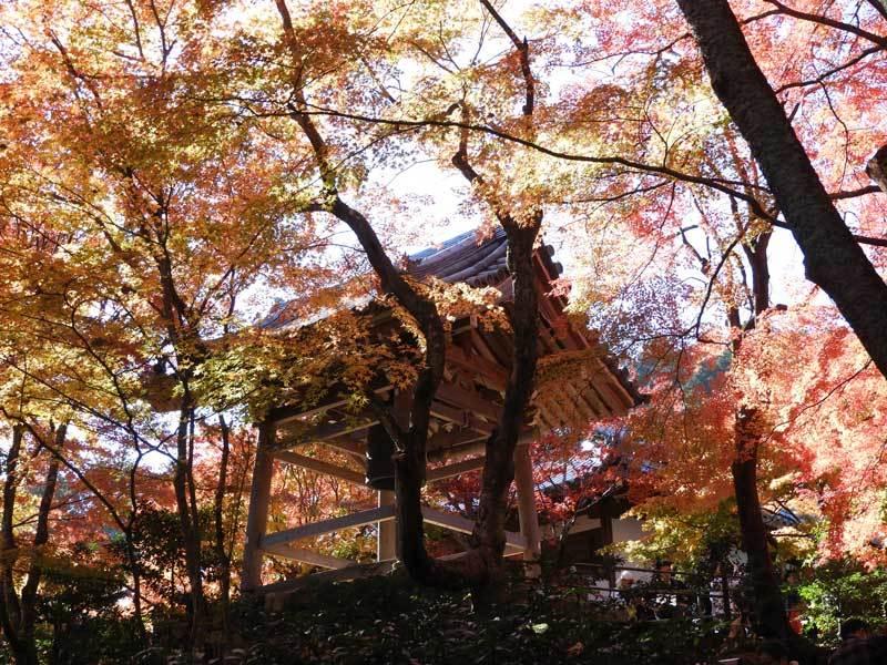 jyoujyakukouji191123-23.jpg