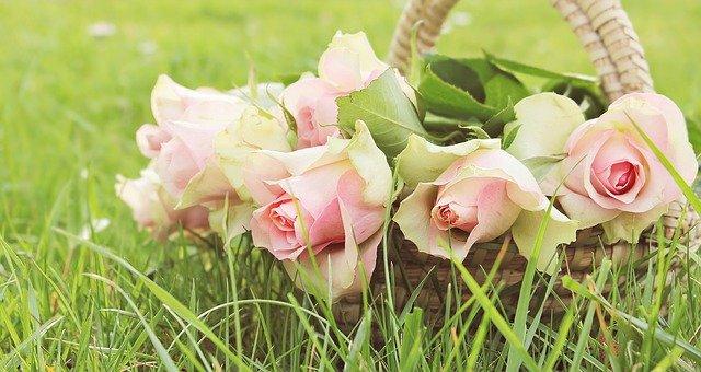 roses-2200770_640.jpg