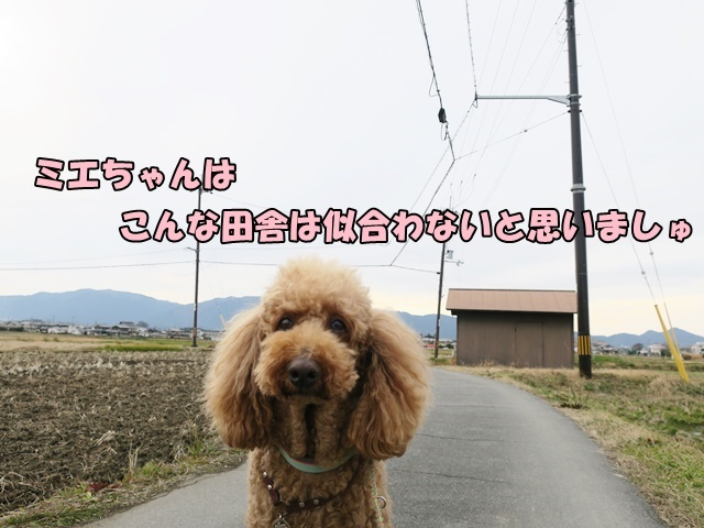 IMG_722620200119.jpg