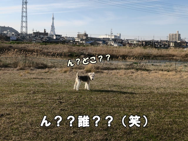 IMG_786620200220a.jpg