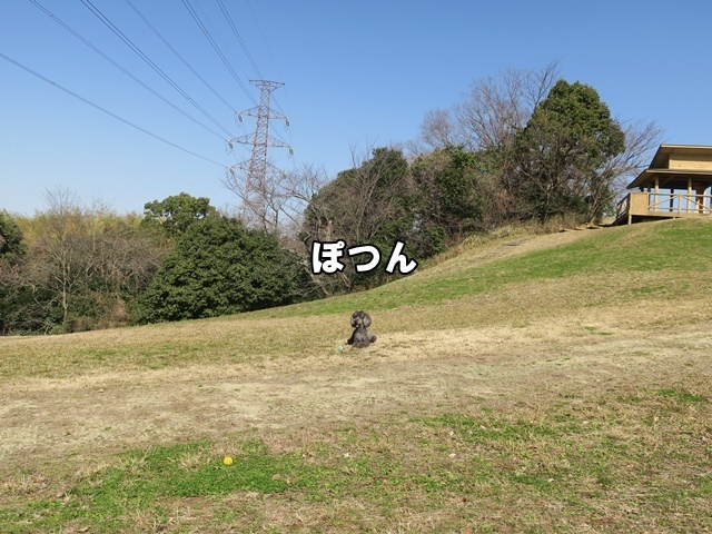 IMG_796920200225.jpg