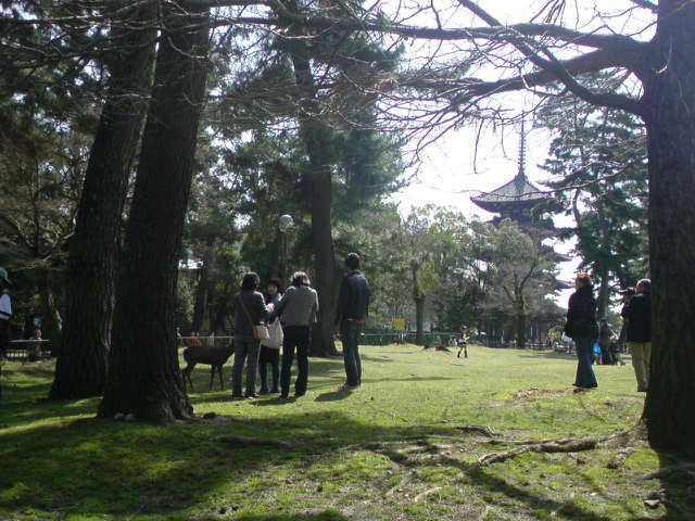 Holiday in Nara park