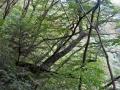 倒れる木々