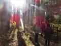 ヒノキの林で遊ぶ
