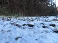 うっすら積もった雪