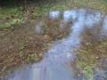 草原が池に