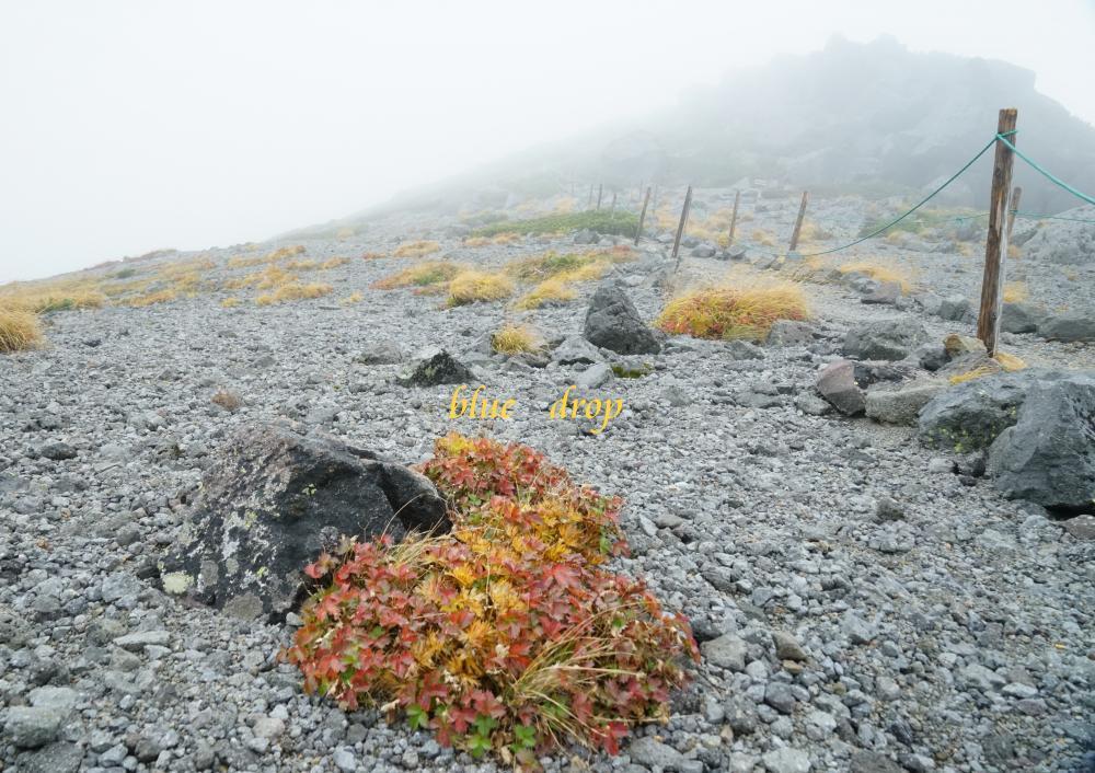 霧の大黒岳*