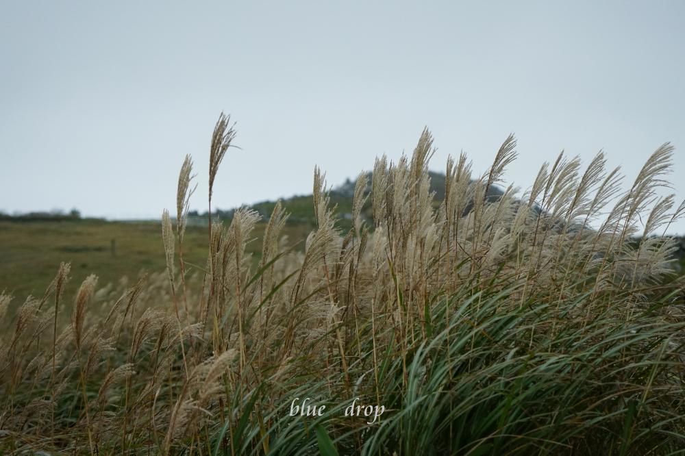 秋の訪れ*