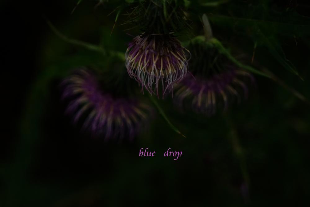 花火の花*