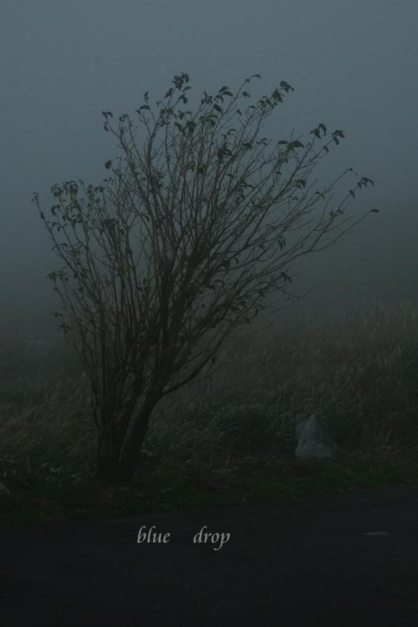 霧のなか*
