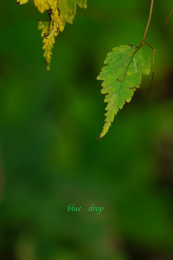 森のしずく*