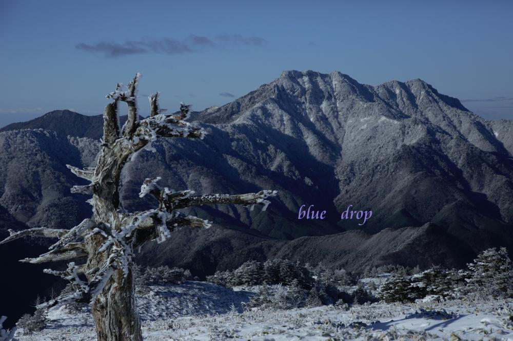 老木と霊峰