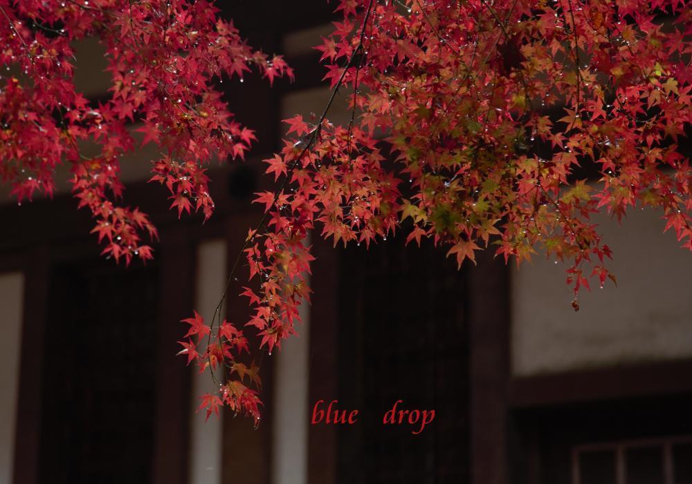 露の付いた紅葉