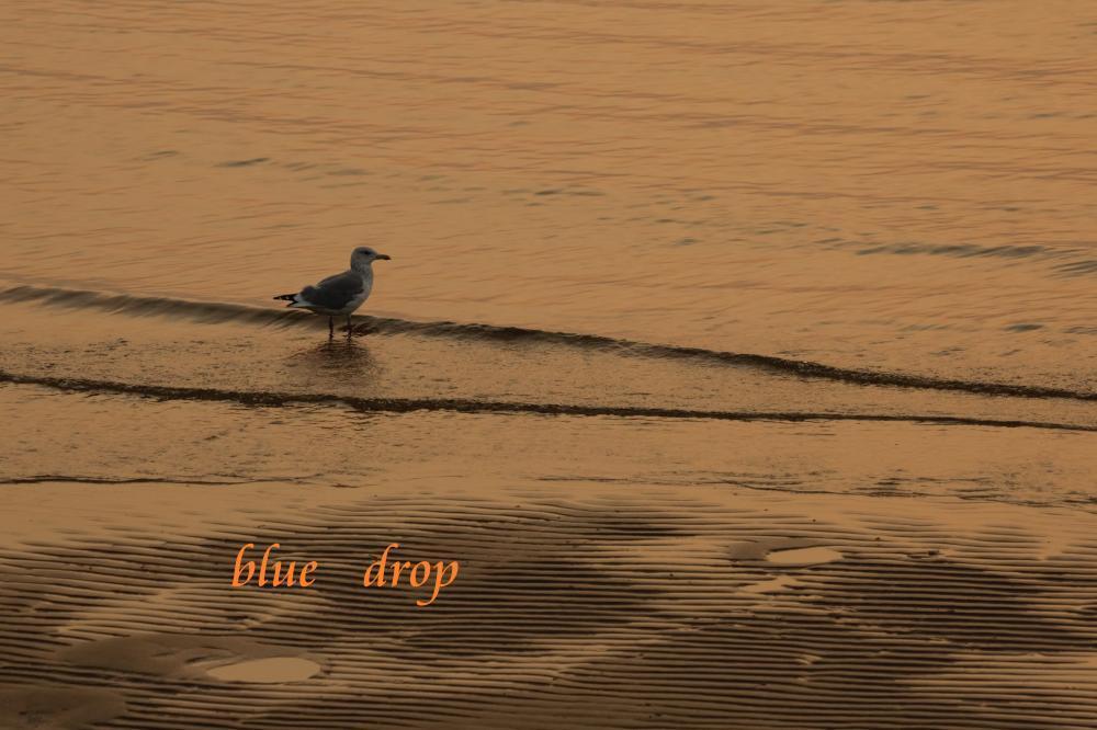 鳥が遊ぶ浜