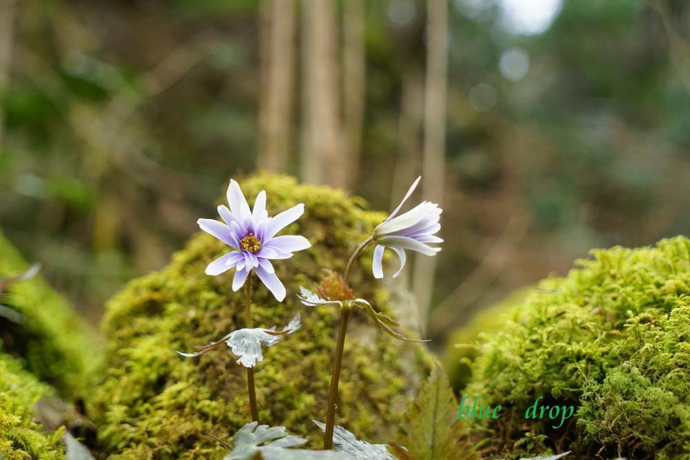 瑠璃色の森*