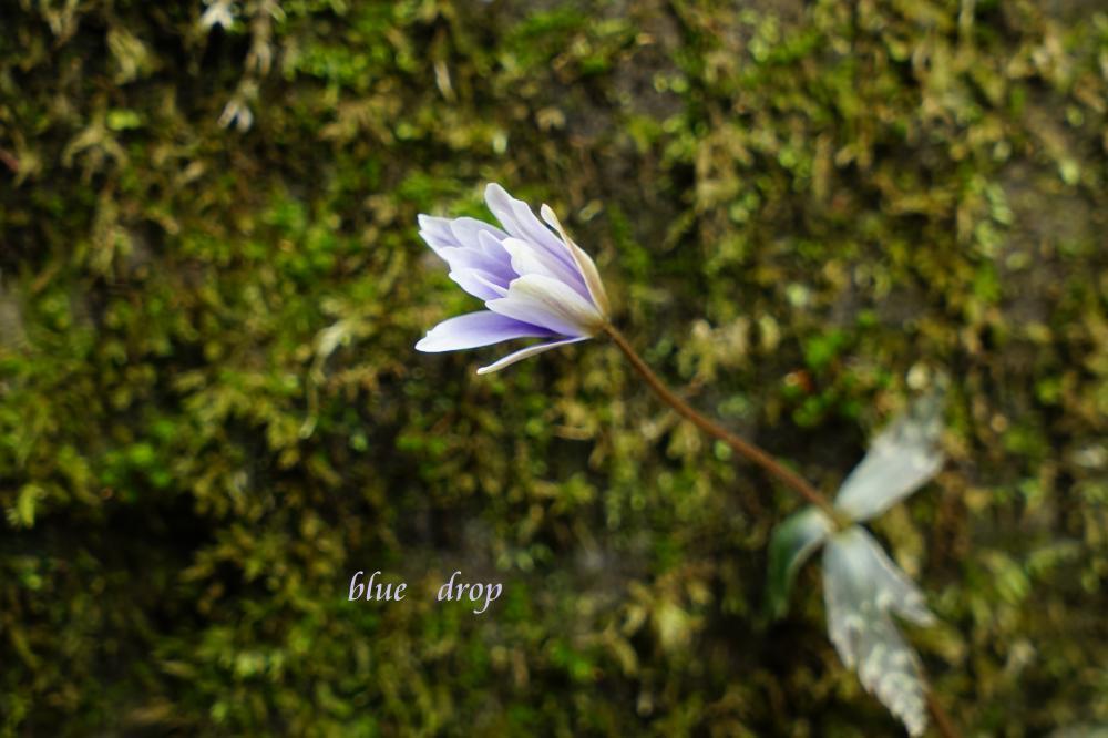 *spring ephemeral