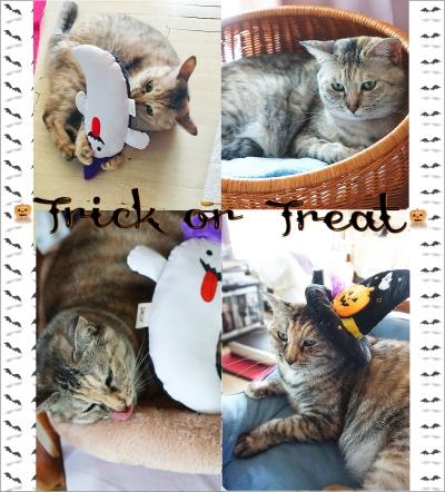 c10-cat.jpg