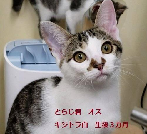 toraji_20191008172345b53.jpg