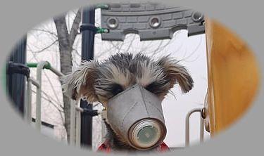 犬用マスク