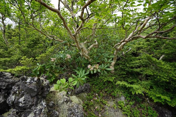 富士たまゆらDSC04856