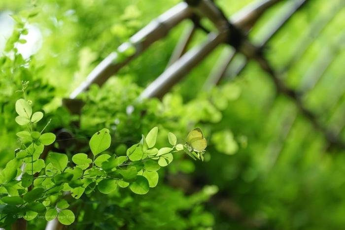 殿ヶ谷戸庭園DSC05368