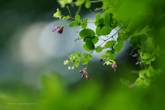 殿ヶ谷戸庭園DSC05377