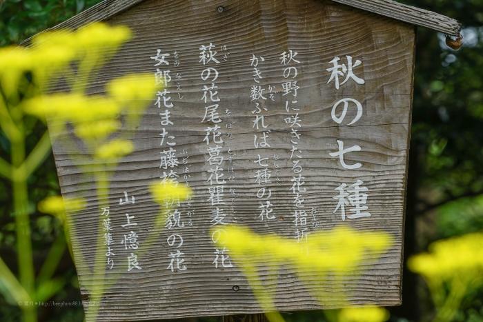殿ヶ谷戸庭園DSC05423