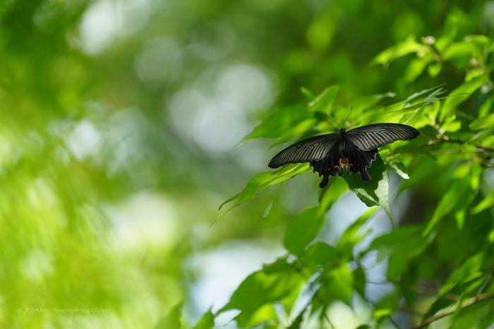 殿ヶ谷戸庭園DSC05388
