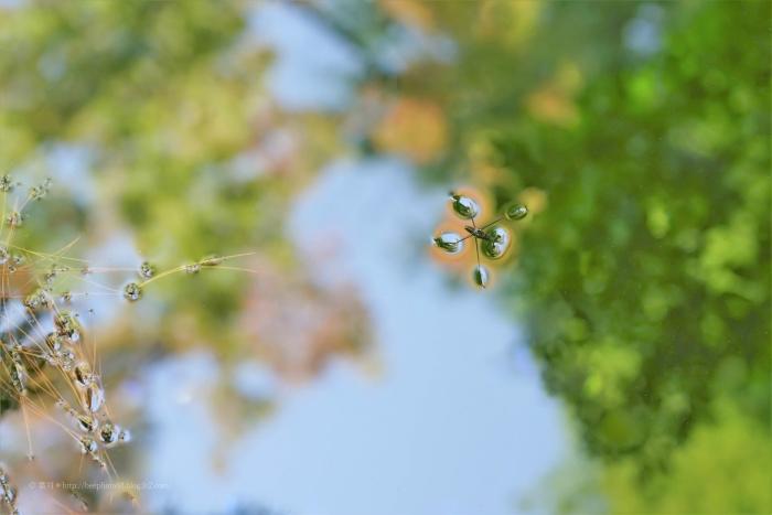 殿ヶ谷戸庭園DSC05300
