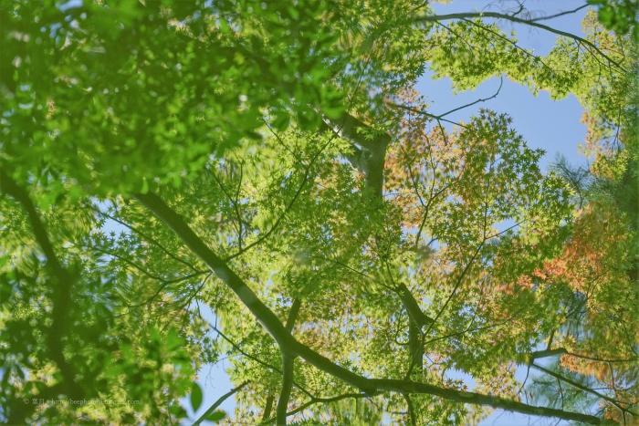 殿ヶ谷戸庭園DSC05297