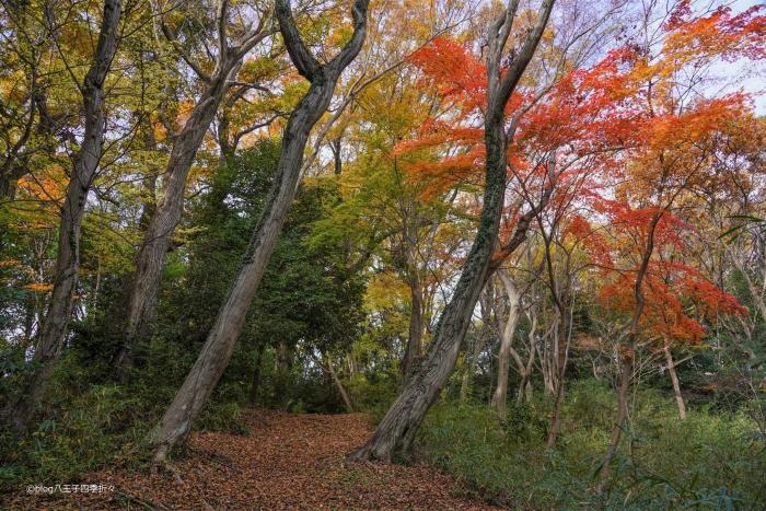 蓮生寺公園DSC07820