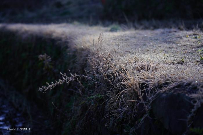 栃谷戸公園DSC01059