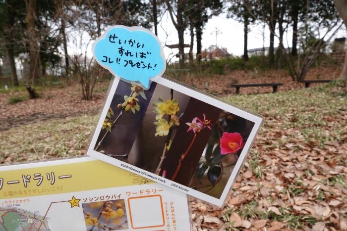 小宮公園DSC07880