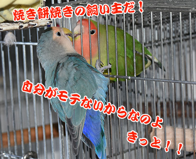 2_ヤキモチ