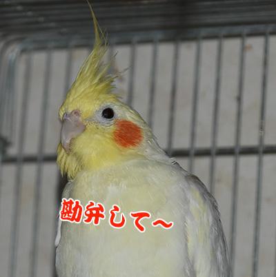 10_勘弁