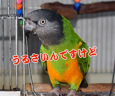 4_うるさい