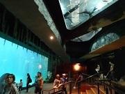 P2019913、天井にも魚が・・・