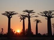 P2019916、バオバブ並木の夕陽