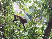 P20191012、猿に出会う