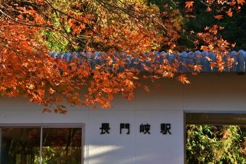 秋の情景201911(2)